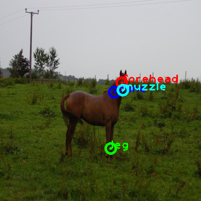 2008_001682-horse_0_ppm10.png