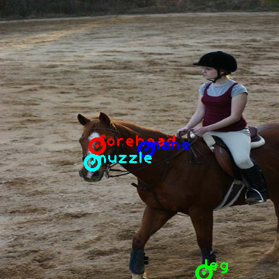 2008_002666-horse_0_ppm10.png