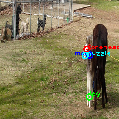 2008_003272-horse_0_ppm10.png