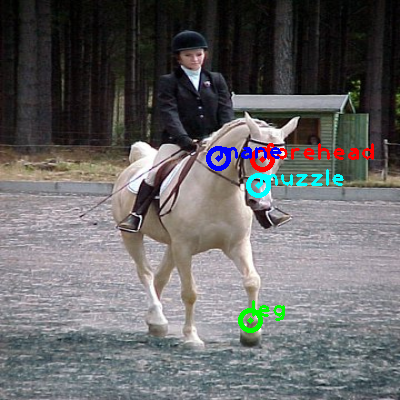 2008_004476-horse_0_ppm10.png
