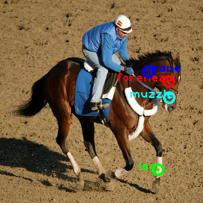 2008_004764-horse_0_ppm10.png