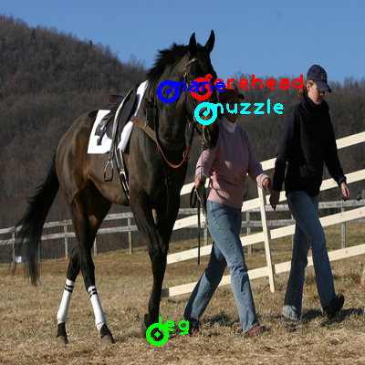 2008_005215-horse_0_ppm10.png