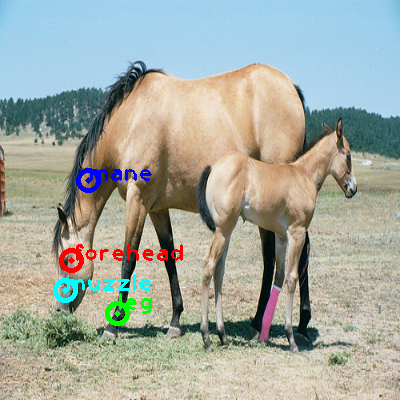 2008_005304-horse_0_ppm10.png