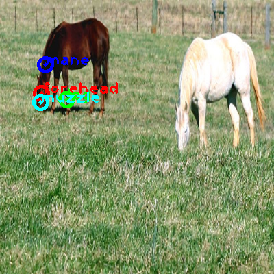 2008_005313-horse_0_ppm10.png