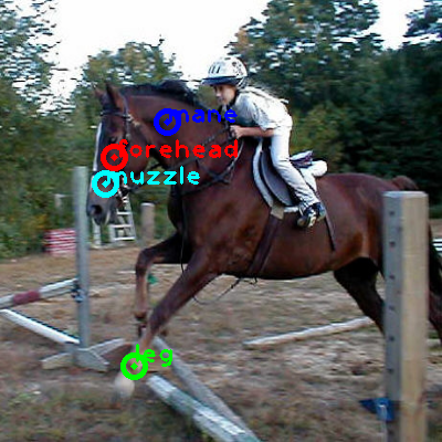 2008_005408-horse_0_ppm10.png