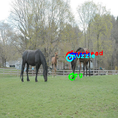 2008_005473-horse_0_ppm10.png