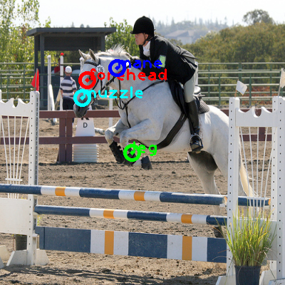 2008_005501-horse_0_ppm10.png