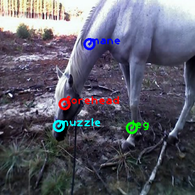 2008_005691-horse_0_ppm10.png