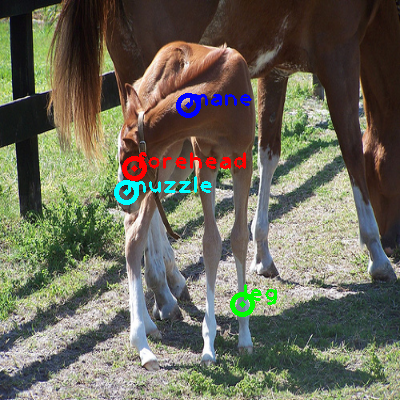 2008_006028-horse_0_ppm10.png