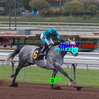 2008_006397-horse_0_ppm10.png