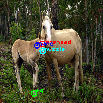 2008_006429-horse_0_ppm10.png