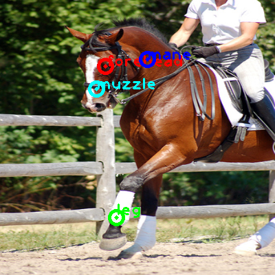 2008_006991-horse_0_ppm10.png