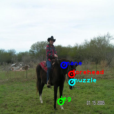 2008_007392-horse_0_ppm10.png
