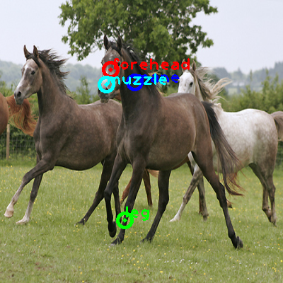2009_000412-horse_0_ppm10.png