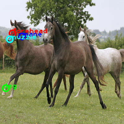2009_000412-horse_1_ppm10.png