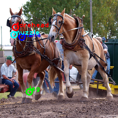2009_000565-horse_0_ppm10.png