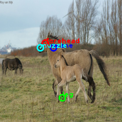 2009_000852-horse_1_ppm10.png
