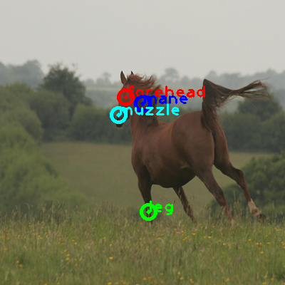 2009_001055-horse_0_ppm10.png
