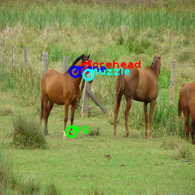 2009_001147-horse_0_ppm10.png