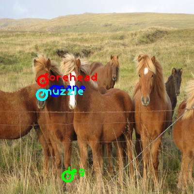 2009_001749-horse_0_ppm10.png