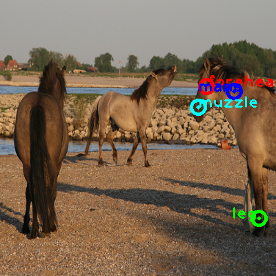 2009_001911-horse_0_ppm10.png