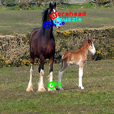 2009_002416-horse_0_ppm10.png