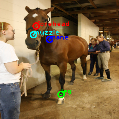 2009_002477-horse_0_ppm10.png