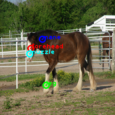 2009_002515-horse_0_ppm10.png