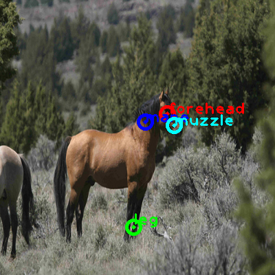 2009_003082-horse_0_ppm10.png