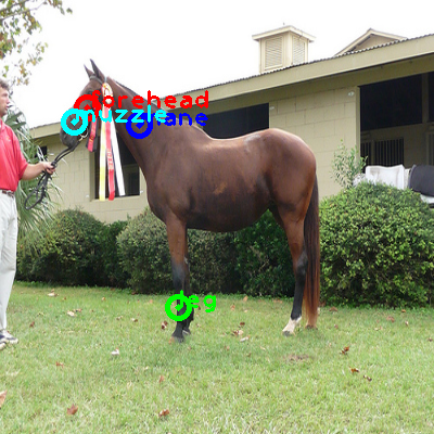 2009_003530-horse_0_ppm10.png
