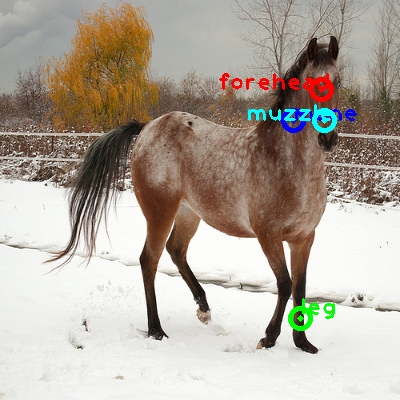 2009_003533-horse_0_ppm10.png
