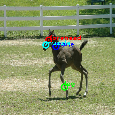 2009_003572-horse_0_ppm10.png