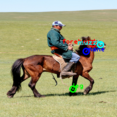 2009_003768-horse_0_ppm10.png
