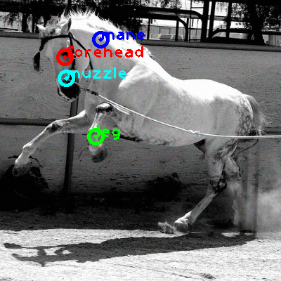 2009_005161-horse_0_ppm10.png