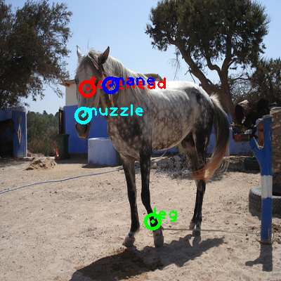 2010_000388-horse_0_ppm10.png