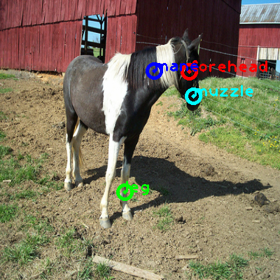 2010_000613-horse_0_ppm10.png