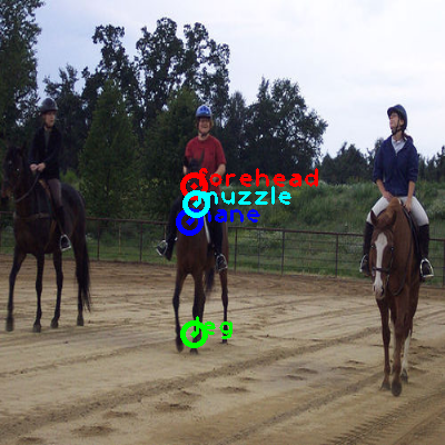 2010_000717-horse_1_ppm10.png