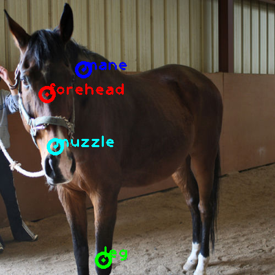 2010_000838-horse_0_ppm10.png