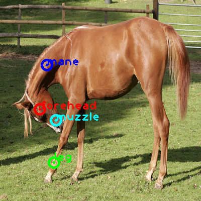 2010_000923-horse_0_ppm10.png