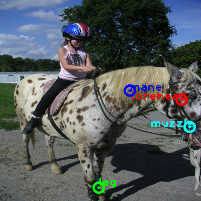 2010_001184-horse_0_ppm10.png