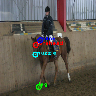 2010_001325-horse_0_ppm10.png