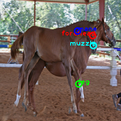 2010_001676-horse_0_ppm10.png