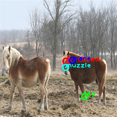2010_001759-horse_1_ppm10.png