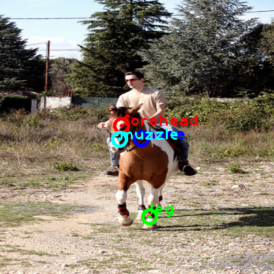 2010_002822-horse_0_ppm10.png