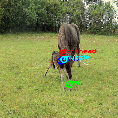 2010_003270-horse_0_ppm10.png
