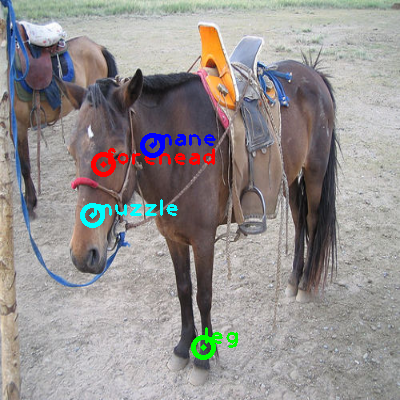 2010_003532-horse_0_ppm10.png