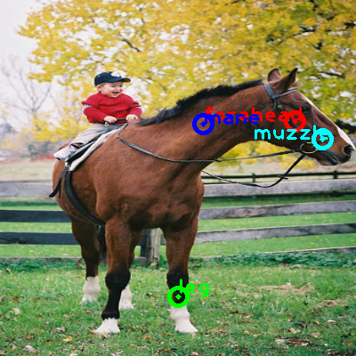 2010_003573-horse_0_ppm10.png