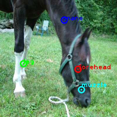 2010_004363-horse_0_ppm10.png