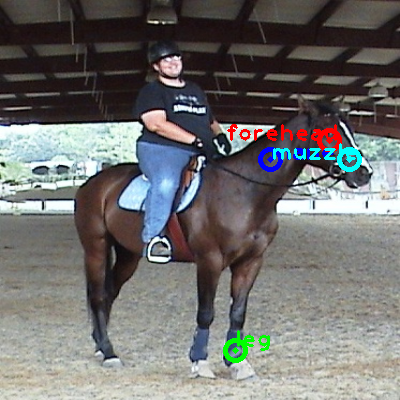 2010_004374-horse_0_ppm10.png