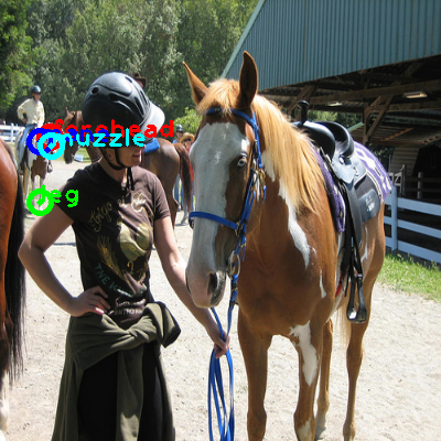 2010_004542-horse_0_ppm10.png